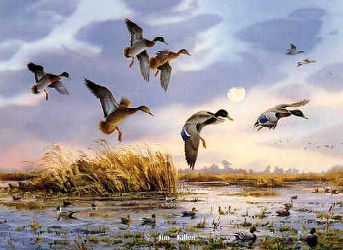 Waterfowl Oil Paintings