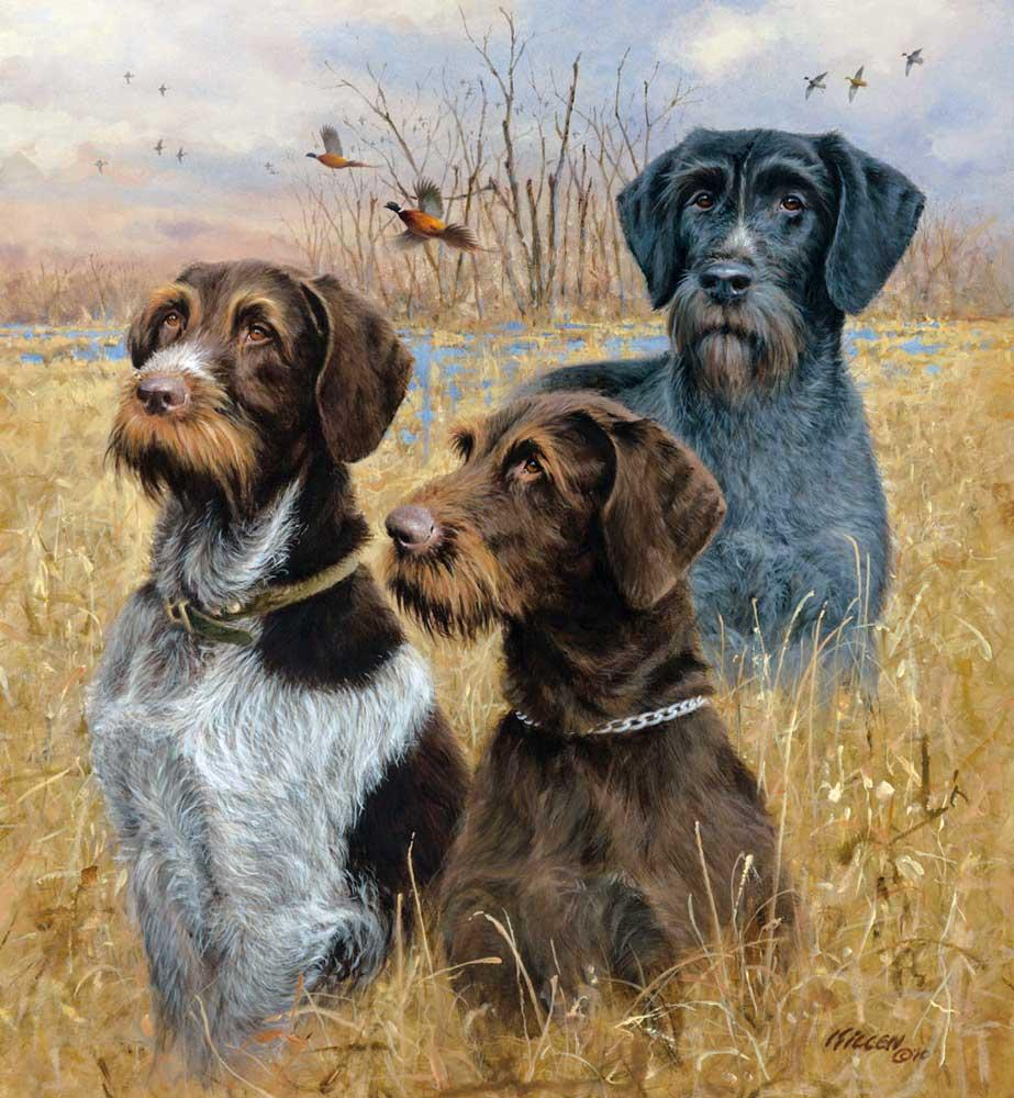 Great Hunting Dogs Ii Drahthaars