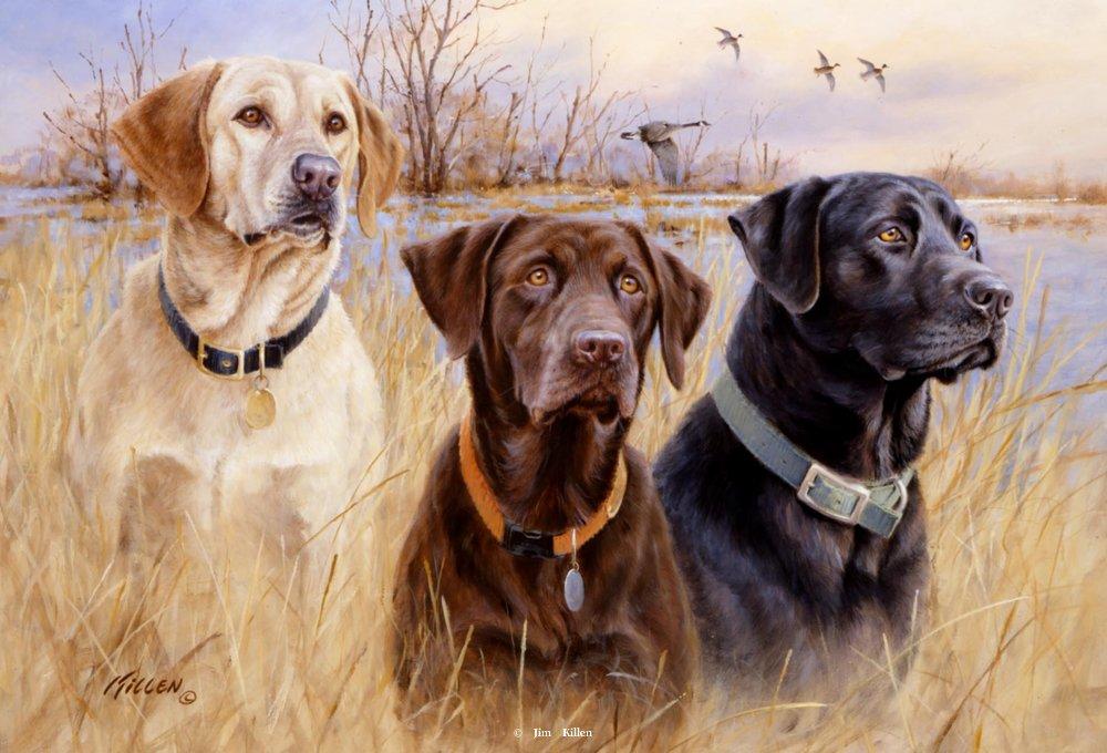 Sporting Dogs - Retrievers - Jim Killen
