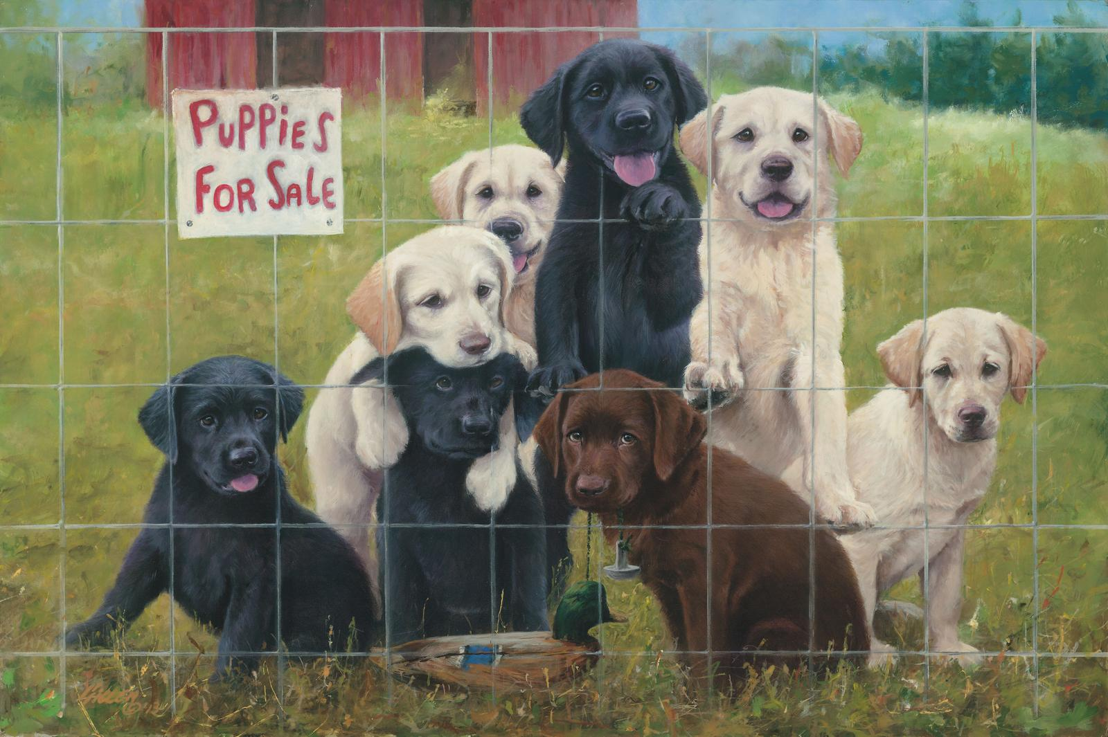 Puppies For Sale New Release Signed Print 16 X 24 Jim Killen