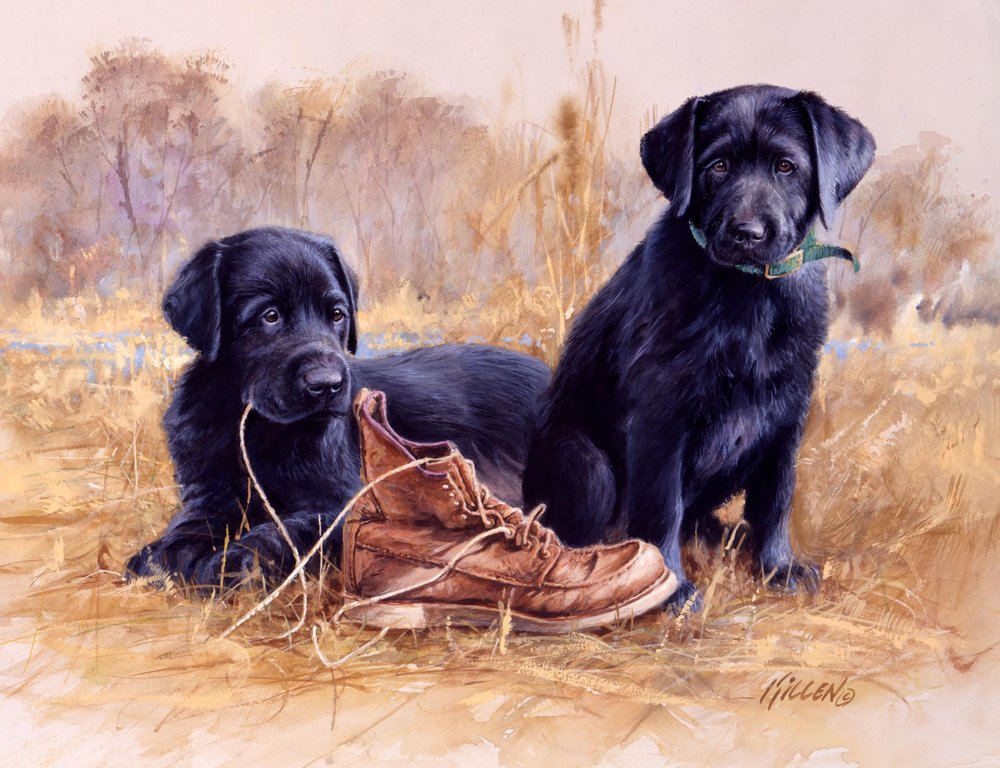 Thats My Puppy Chocolate Labrador Painting By Jim Killen