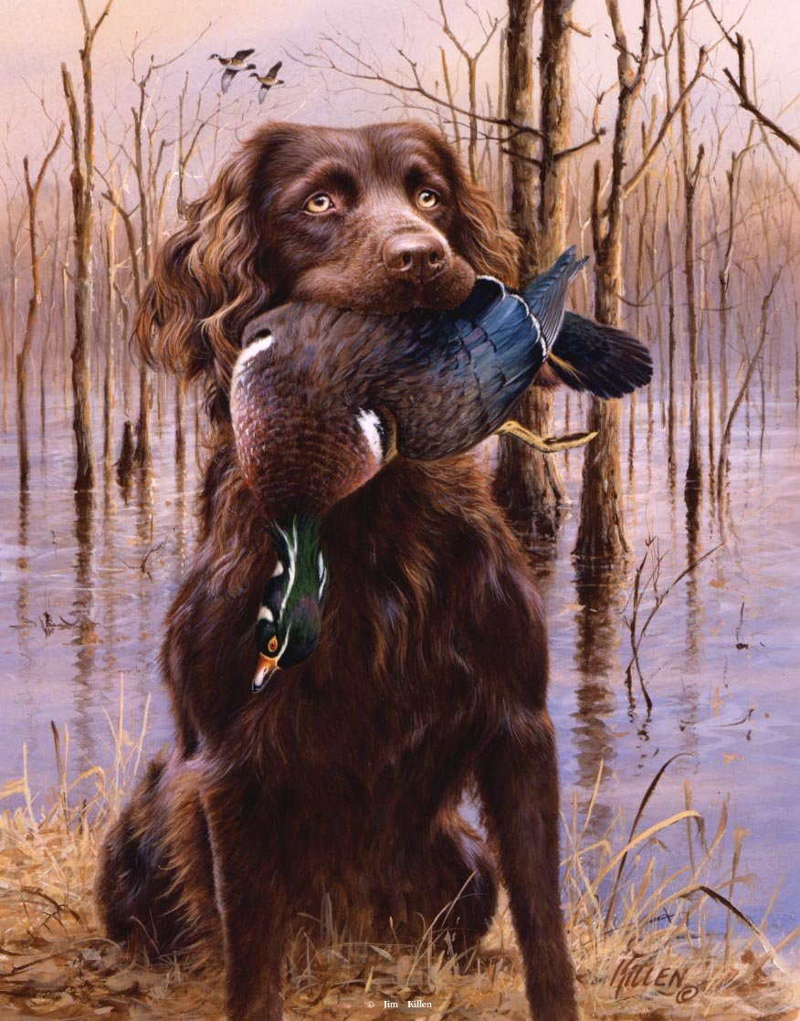 History of the Boykin Spaniel